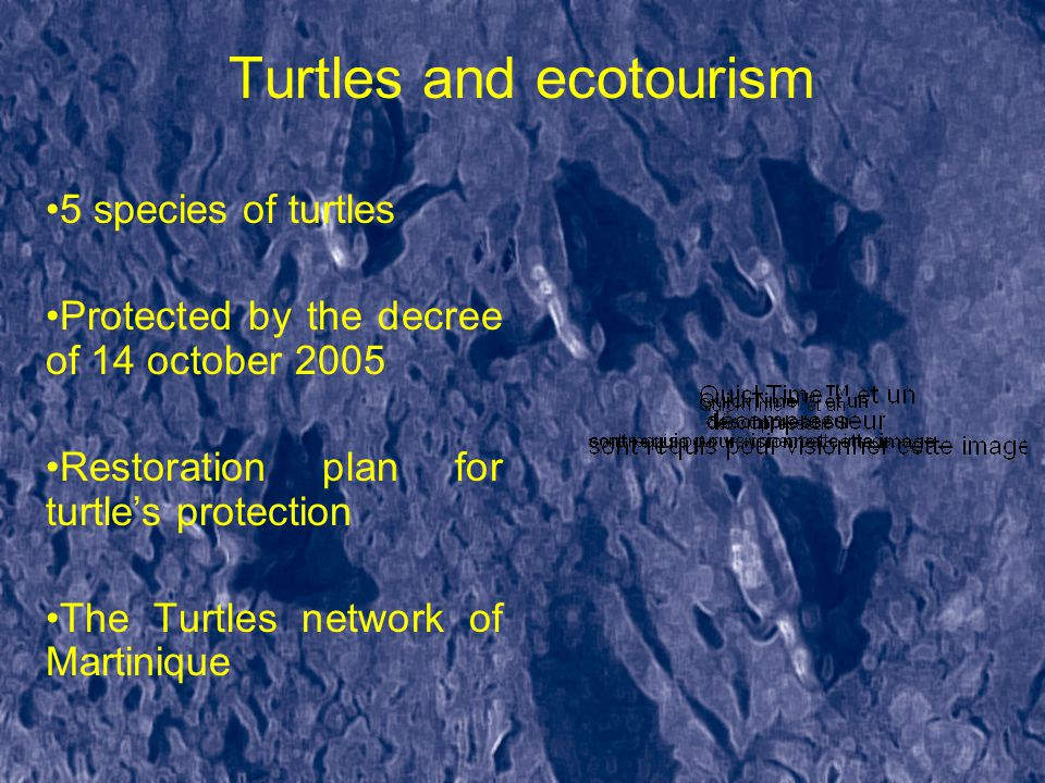 Turtles and ecotourism 5 species of turtles Protected by the decree of 14 october 2005 Restoration plan for turtle's protection The Turtles network of Martinique