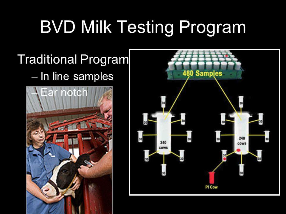 BVD Milk Testing Program Traditional Program –In line samples –Ear notch