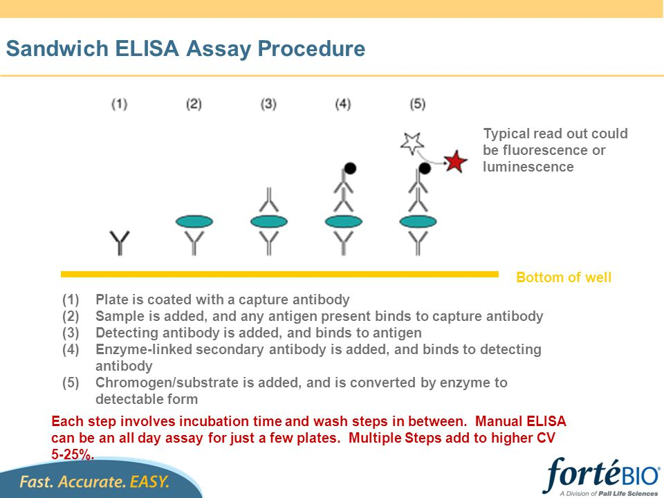 Sandwich ELISA Assay Procedure Bottom of well (1)Plate is coated with a capture antibody (2)Sample is added, and any antigen present binds to capture