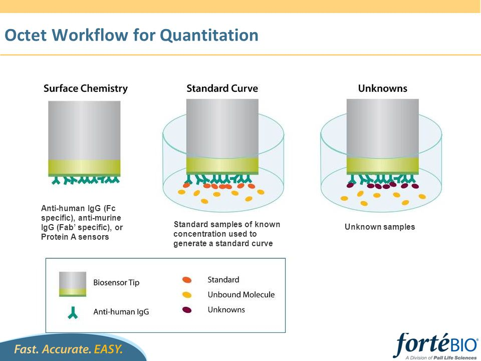 ELISA Conversion Flow Chart Obtain Assay Requirements and Existing ELISA Format (customer input) Select Sensor Type (immobilization mode) Select Assay Format (sensitivity & throughput) Validating Assay Format Managing NSB & Matrix Effect Optimize Reagent Formulation Further optimization if not meeting the spec.