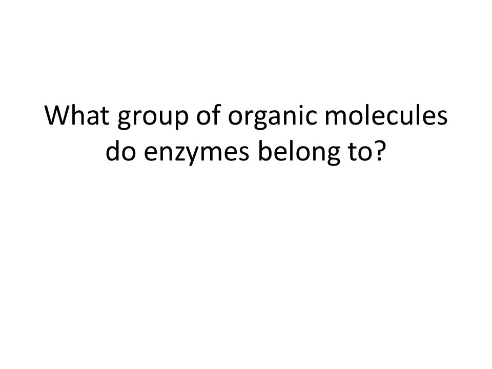 What group of organic molecules do enzymes belong to?