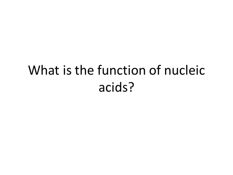 What is the function of nucleic acids?