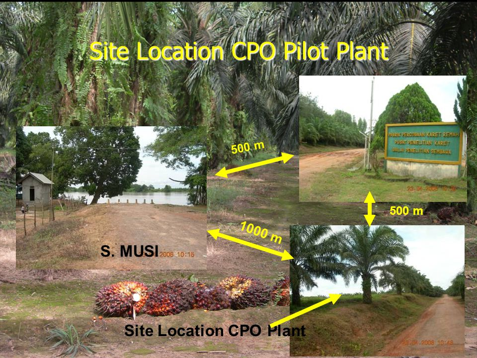 Site Location CPO Pilot Plant S. MUSI 500 m 1000 m Site Location CPO Plant