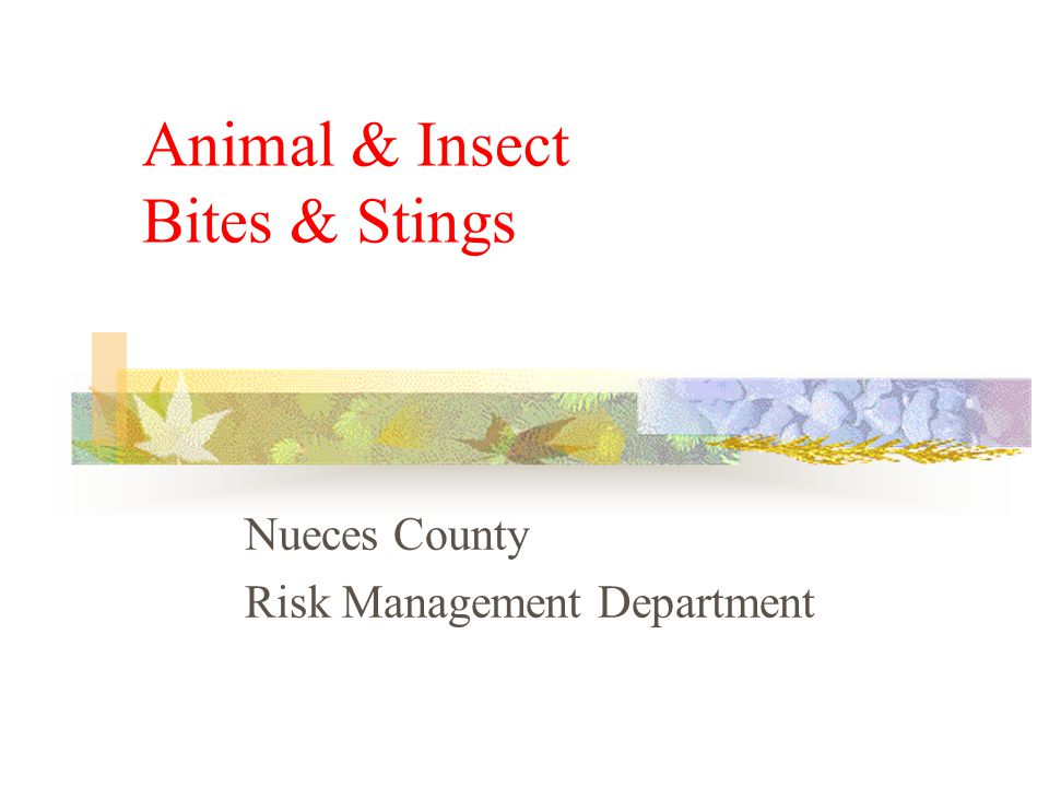 Animal & Insect Bites & Stings Nueces County Risk Management Department