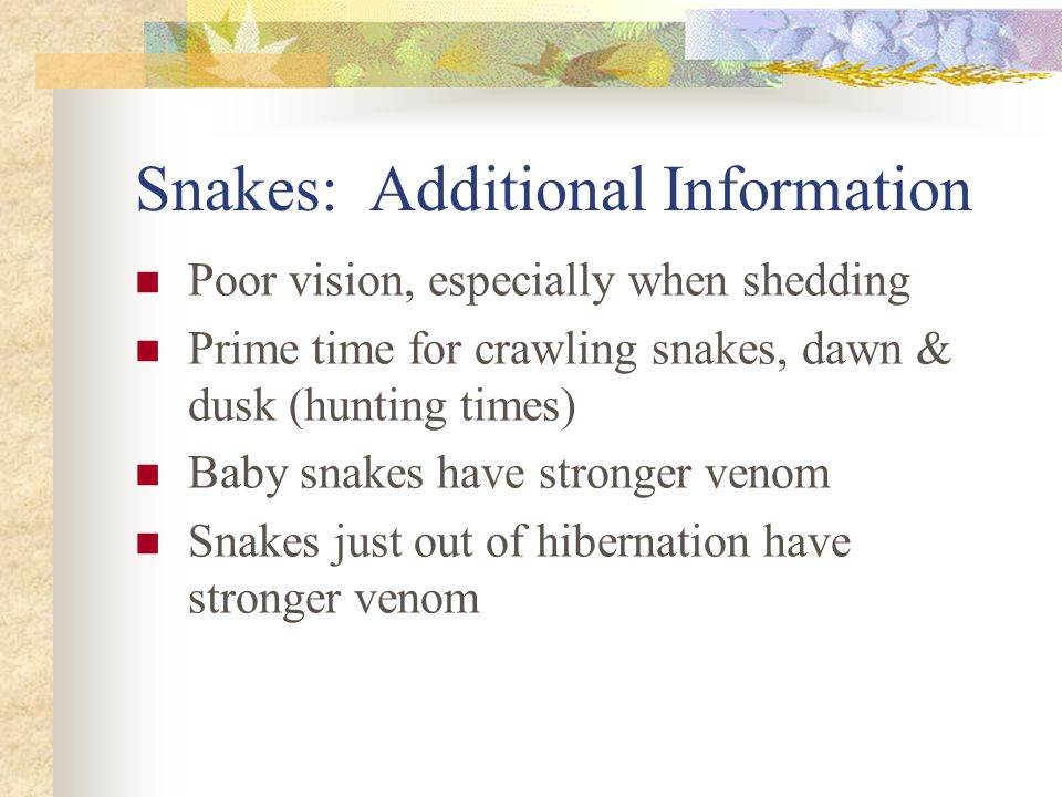 Snakes: Additional Information Poor vision, especially when shedding Prime time for crawling snakes, dawn & dusk (hunting times) Baby snakes have stronger venom Snakes just out of hibernation have stronger venom