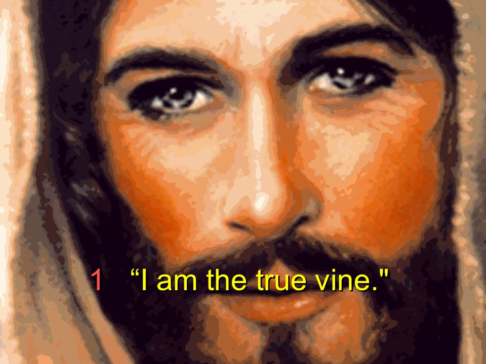 1 I am the true vine.