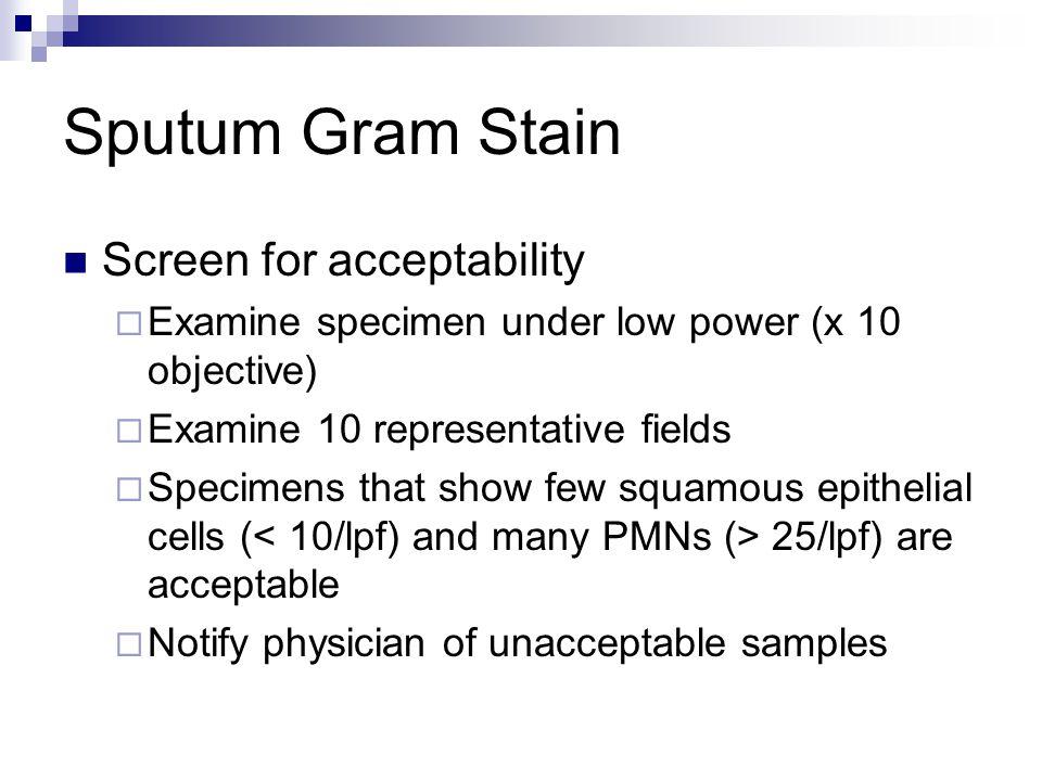 Sputum Gram Stain Screen for acceptability  Examine specimen under low power (x 10 objective)  Examine 10 representative fields  Specimens that sho