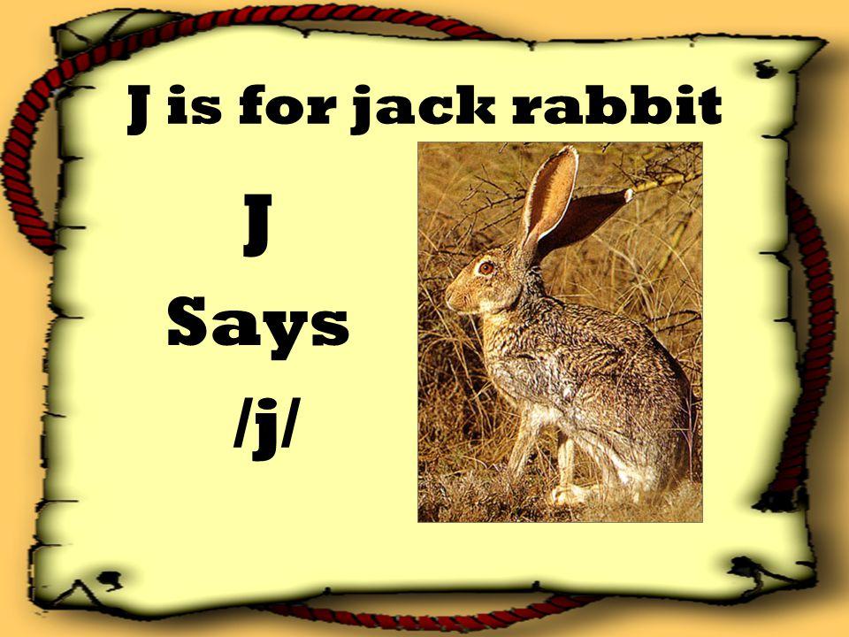 J is for jack rabbit J Says /j/