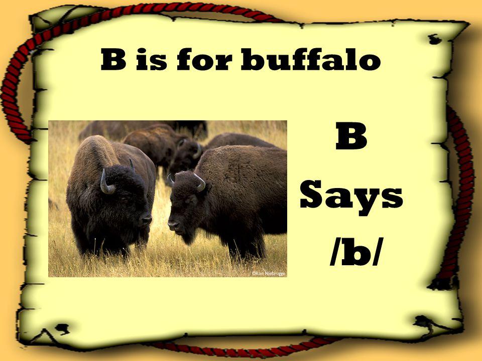 B is for buffalo B Says /b/