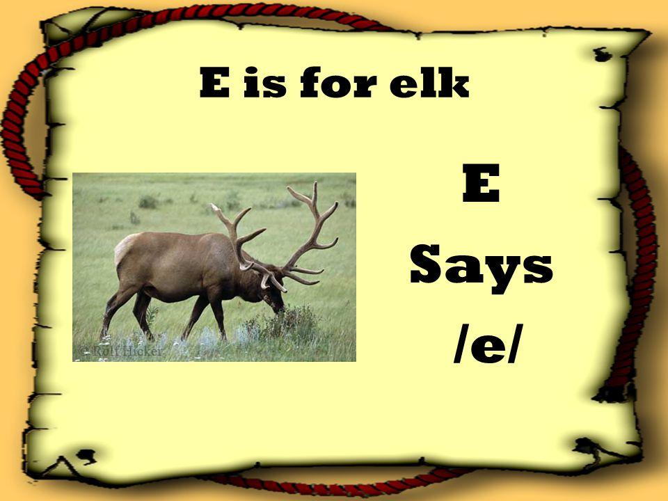E is for elk E Says /e/