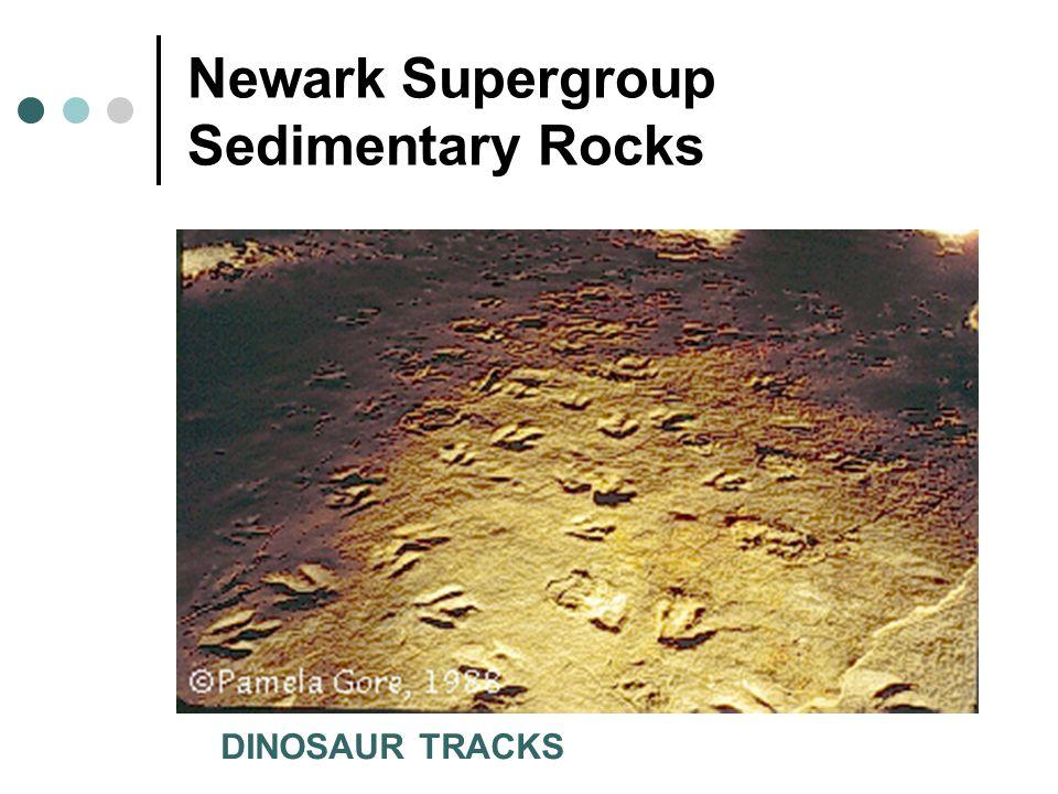 Newark Supergroup Sedimentary Rocks DINOSAUR TRACKS