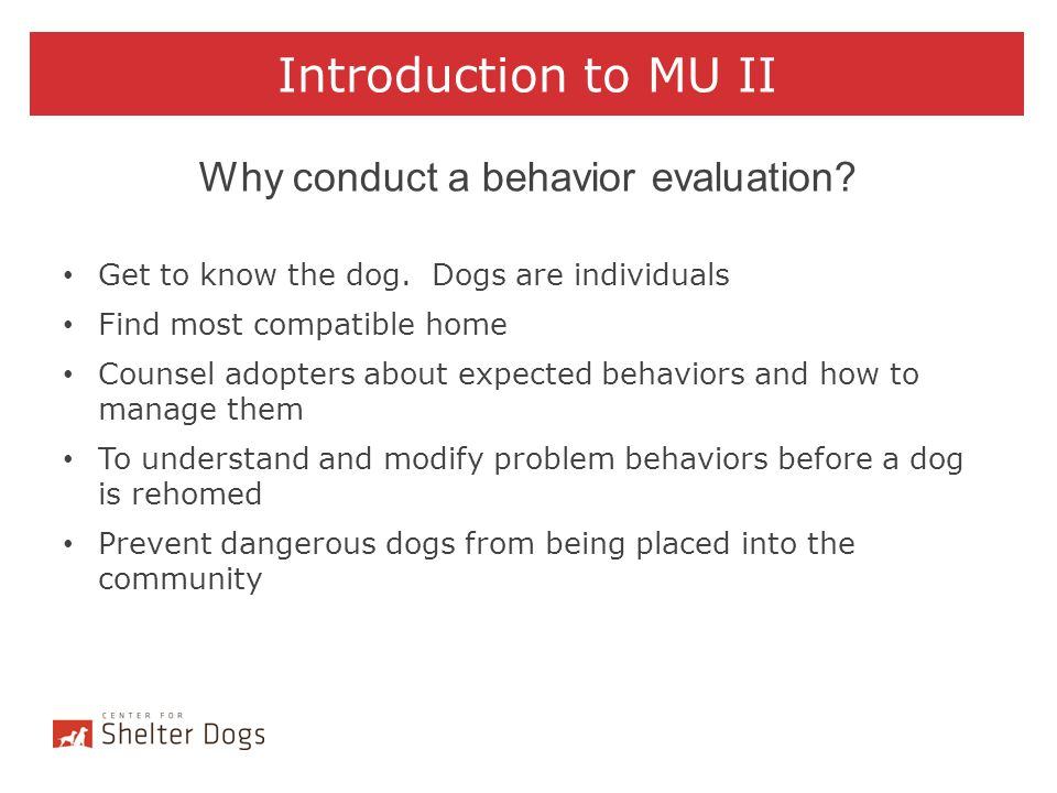 Introduction to MU II Why conduct a behavior evaluation? Get to know the dog. Dogs are individuals Find most compatible home Counsel adopters about ex