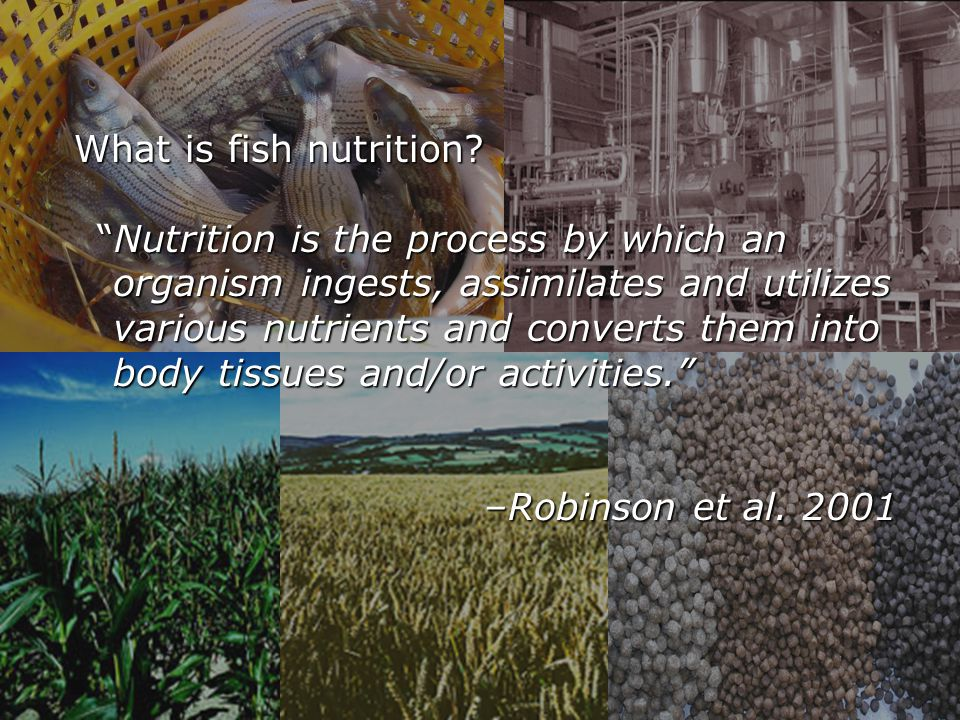 What is fish nutrition.