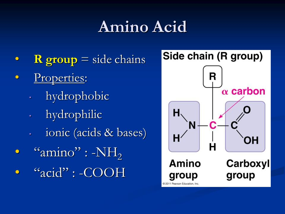 Amino Acid R group = side chains R group = side chains Properties: Properties: hydrophobic hydrophobic hydrophilic hydrophilic ionic (acids & bases) i