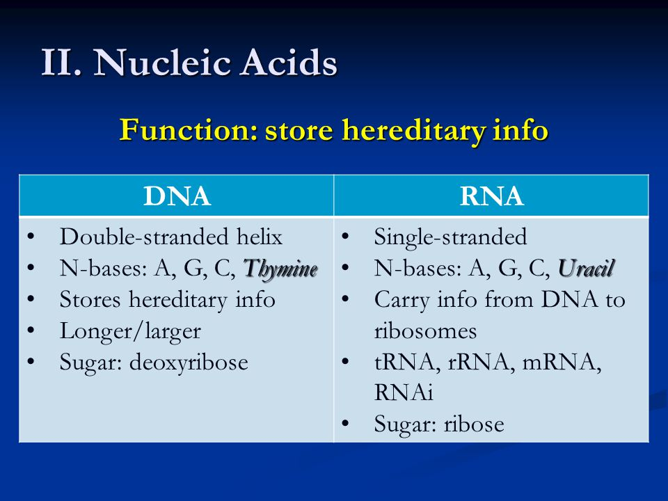 II. Nucleic Acids Function: store hereditary info DNARNA Double-stranded helix ThymineN-bases: A, G, C, Thymine Stores hereditary info Longer/larger S