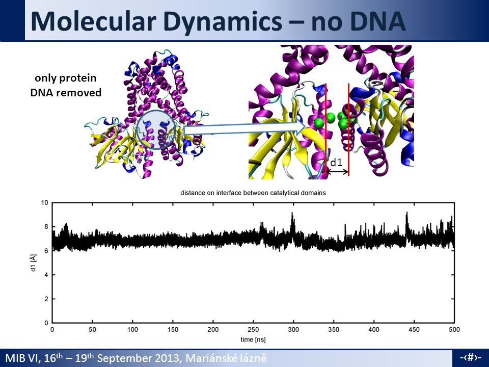 MIB VI, 16 th – 19 th September 2013, Mariánské lázně -7- Molecular Dynamics – no DNA only protein DNA removed d1