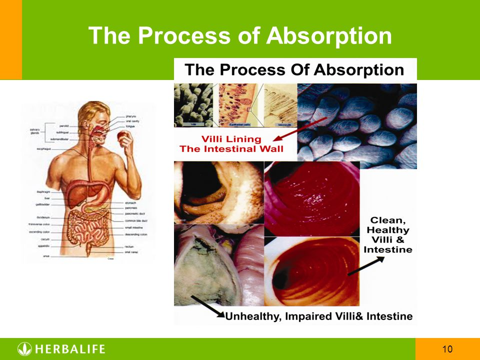 10 The Process of Absorption