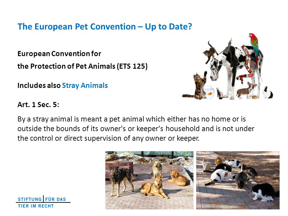 The European Pet Convention – Up to Date.