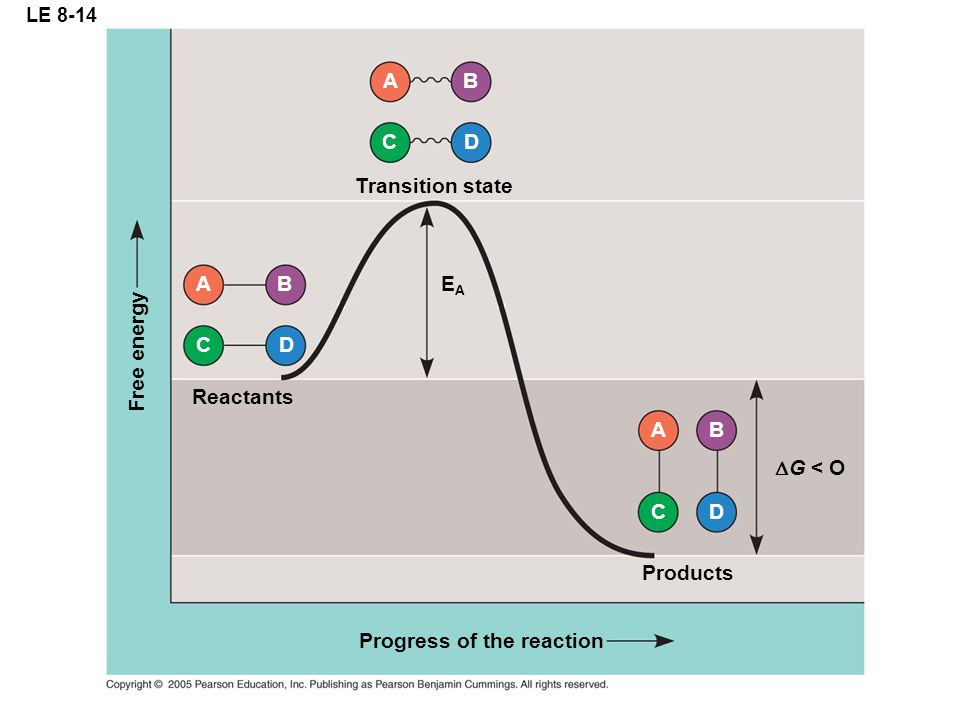LE 8-14 Transition state CD A B EAEA Products CD A B  G < O Progress of the reaction Reactants C D A B Free energy