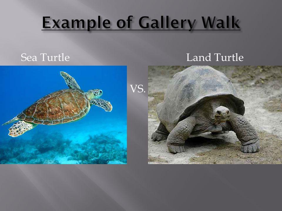 Sea TurtleLand Turtle VS.