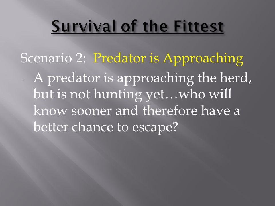 Scenario 2: Predator is Approaching - A predator is approaching the herd, but is not hunting yet…who will know sooner and therefore have a better chan
