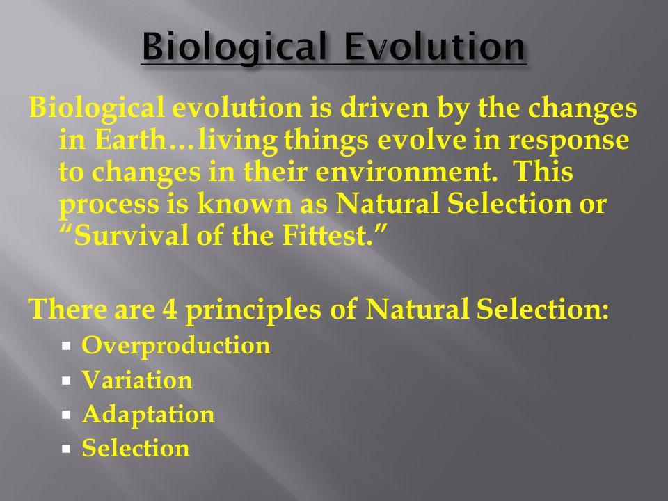 Embryology – shows similar developmental stages amongst different species