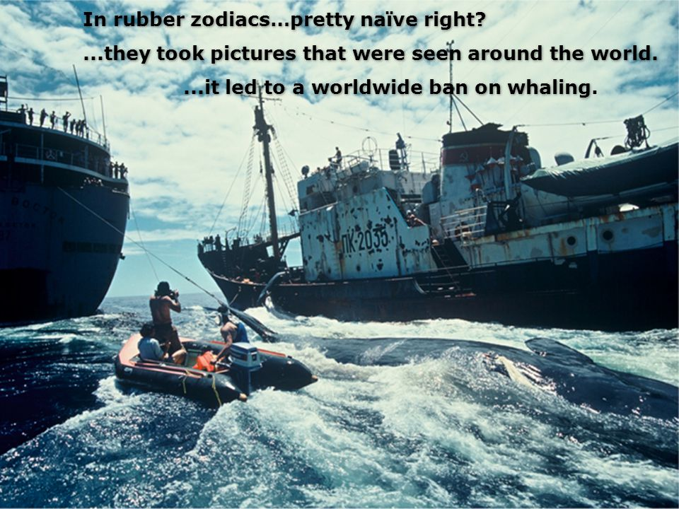 In rubber zodiacs…pretty naïve right ...they took pictures that were seen around the world....it led to a worldwide ban on whaling....it led to a worldwide ban on whaling.