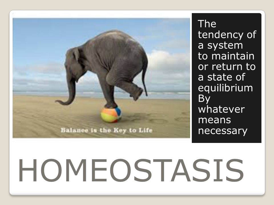 HOMEOSTASIS The tendency of a system to maintain or return to a state of equilibrium By whatever means necessary