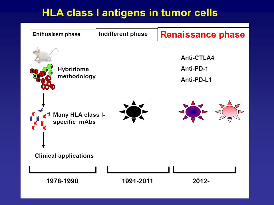 ( HLA class I antigens in tumor cells Clinical applications 1991-20111978-19902012- Hybridoma methodology Many HLA class I- specific mAbs Renaissance