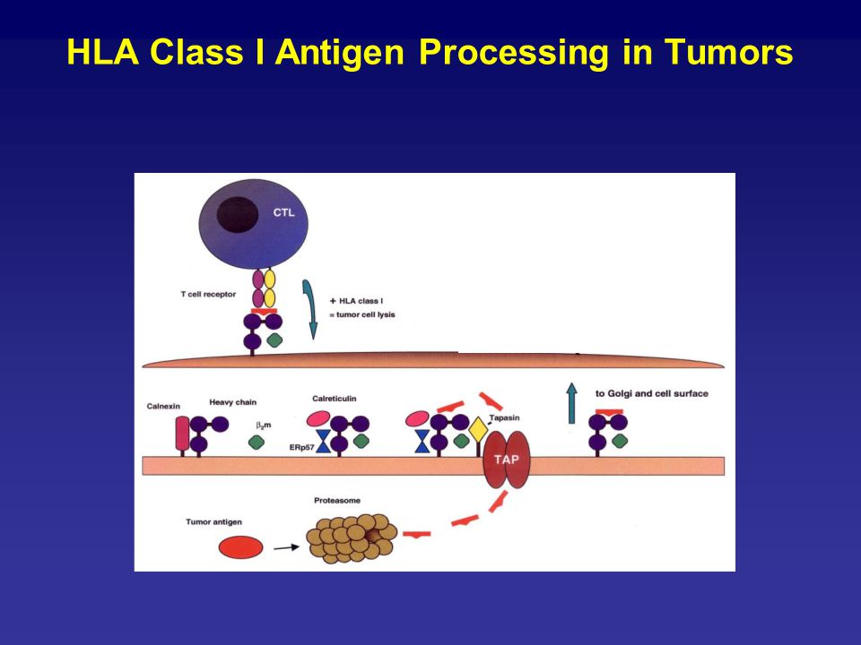 HLA Class I Antigen Processing in Tumors