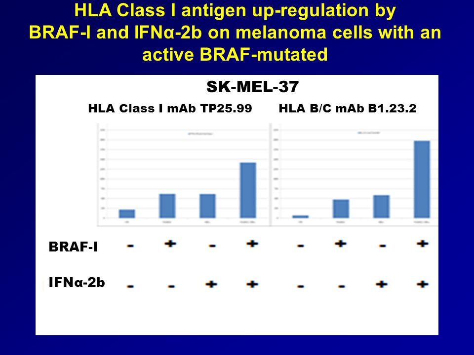 HLA Class I antigen up-regulation by BRAF-I and IFNα-2b on melanoma cells with an active BRAF-mutated SK-MEL-37 IFNα-2b BRAF-I HLA Class I mAb TP25.99