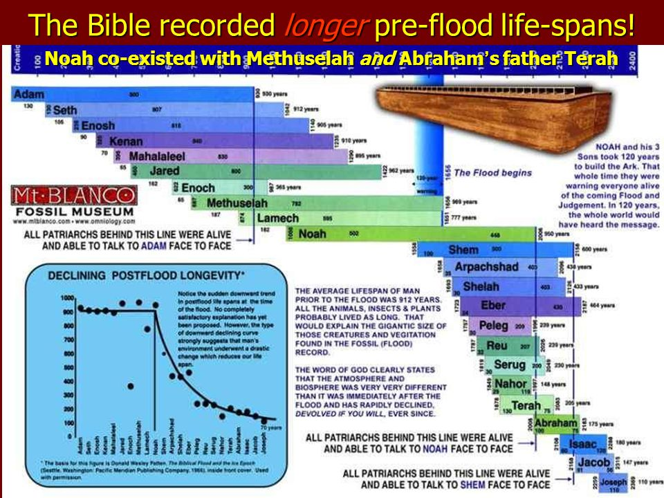 The Bible recorded longer pre-flood life-spans! Noah co-existed with Methuselah and Abraham ' s father Terah