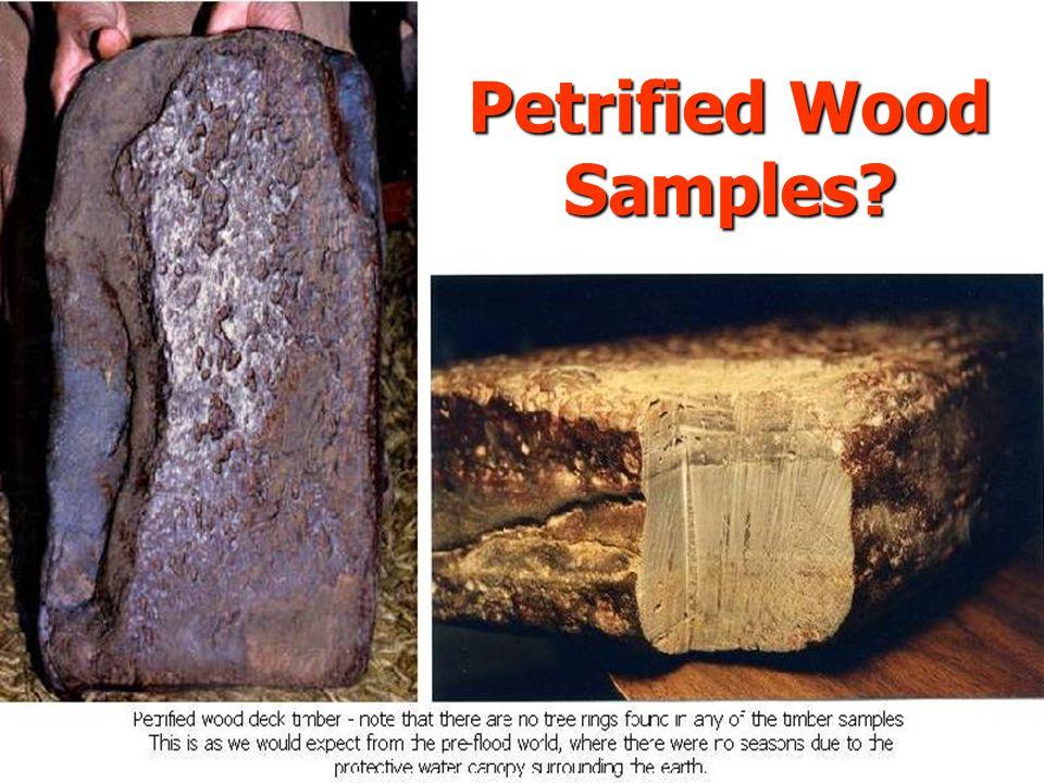 Petrified Wood Samples?