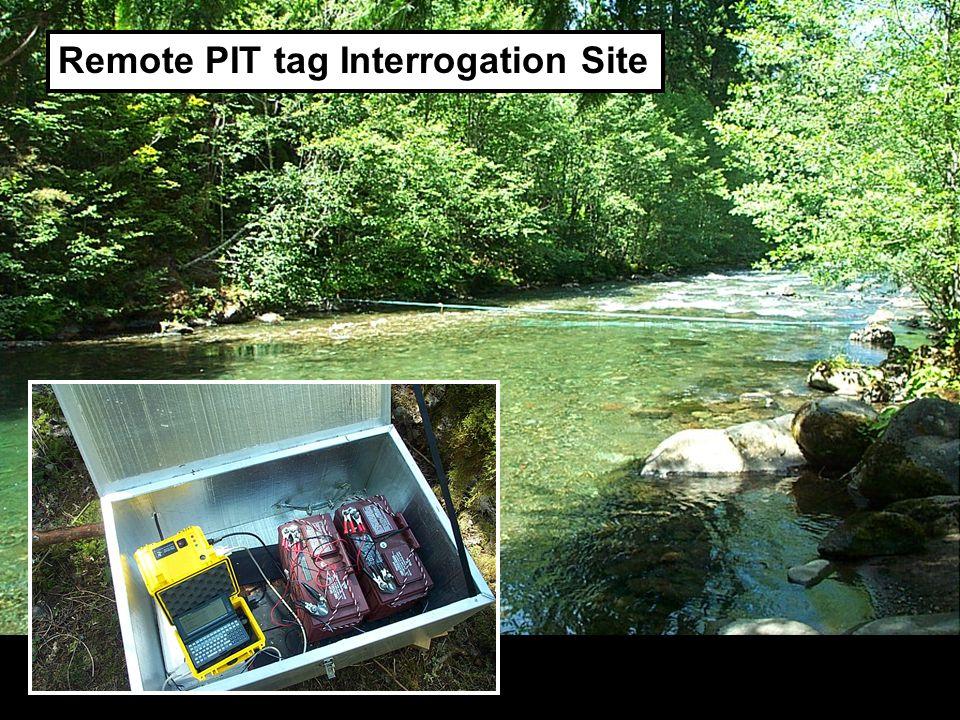 DO Remote PIT tag Interrogation Site