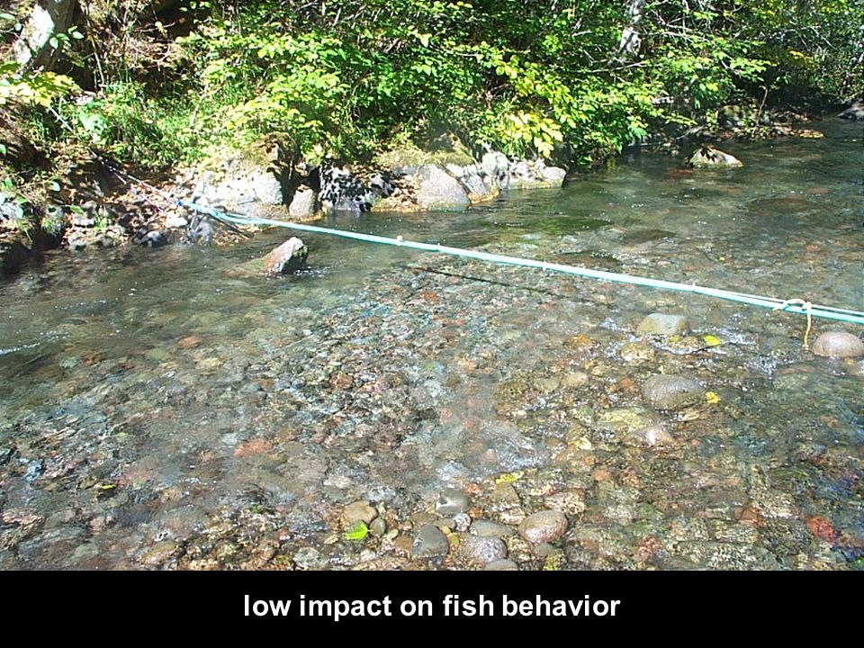 DO low impact on fish behavior