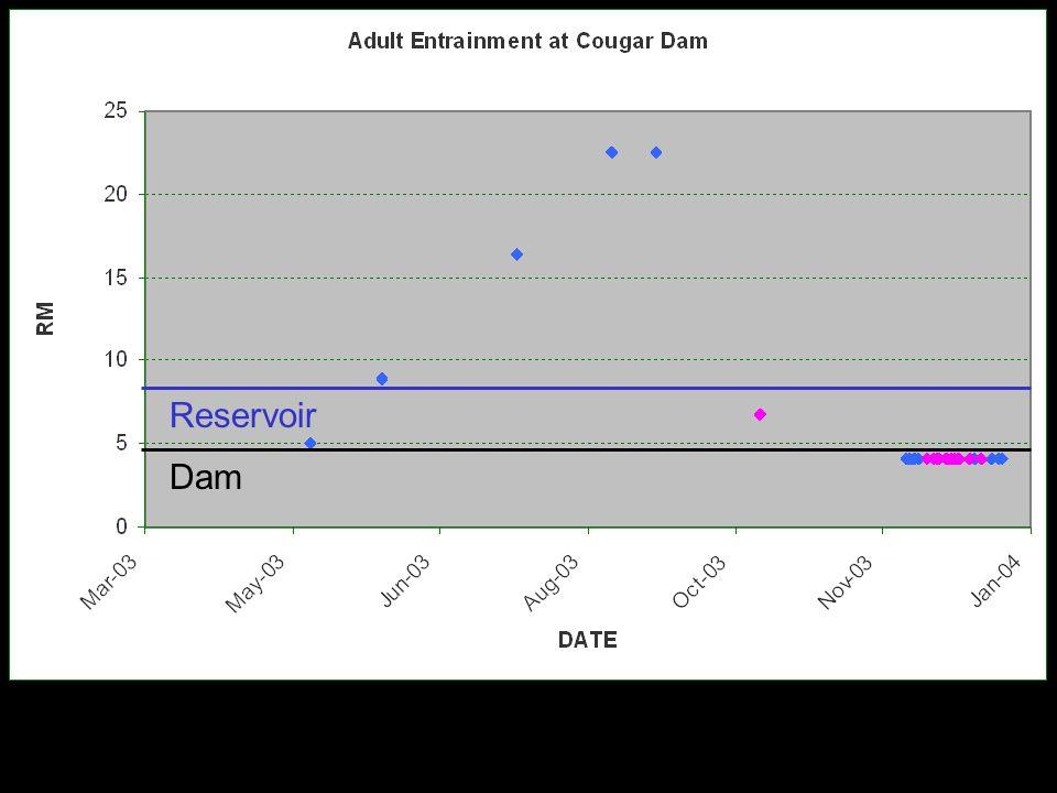 Adult but Reservoir Dam