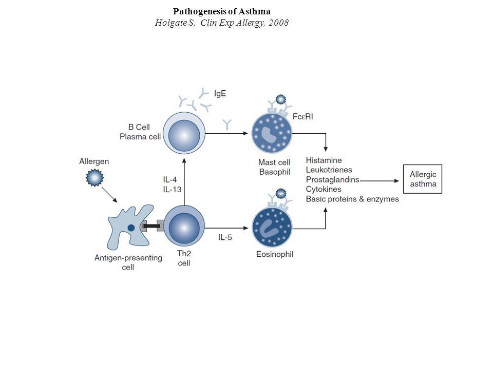 Pathogenesis of Asthma Holgate S, Clin Exp Allergy, 2008 La cellula Th2 è fondamentale per la maturazione dell'eosinofilo