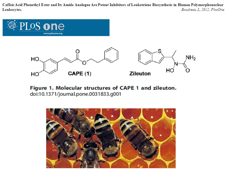 Caffeic Acid Phenethyl Ester and Its Amide Analogue Are Potent Inhibitors of Leukotriene Biosynthesis in Human Polymorphonuclear Leukocytes. Boudreau
