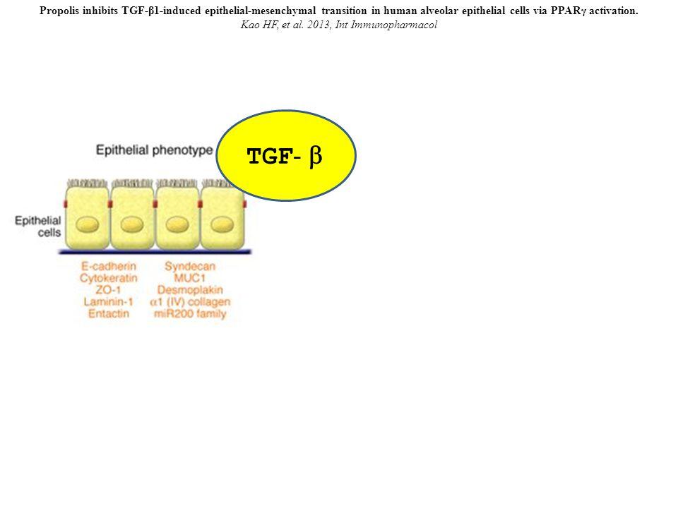 Propolis inhibits TGF-β1-induced epithelial-mesenchymal transition in human alveolar epithelial cells via PPARγ activation. Kao HF, et al. 2013, Int I