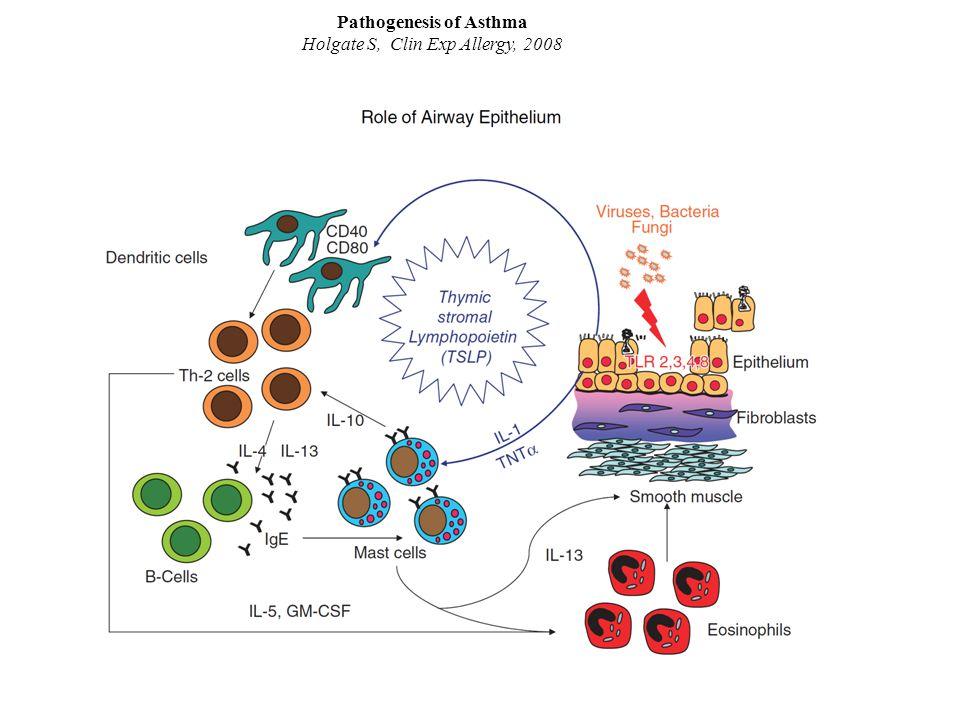 Pathogenesis of Asthma Holgate S, Clin Exp Allergy, 2008