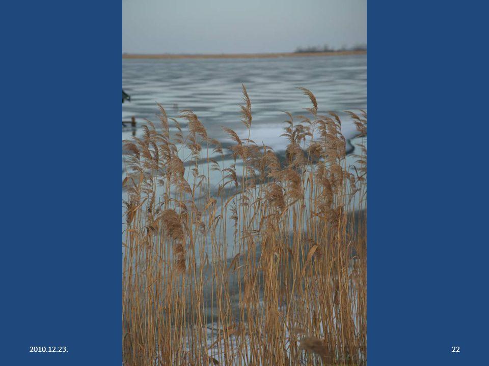 2010.12.23.Lake Fertő has frozen up21