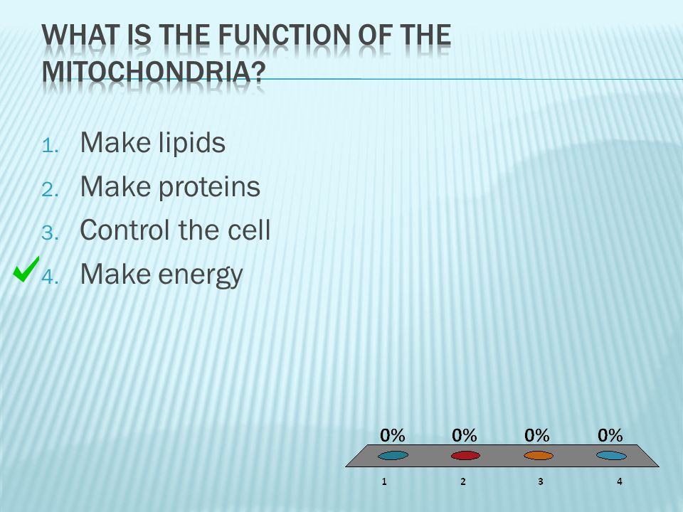 1. Make lipids 2. Make proteins 3. Control the cell 4. Make energy