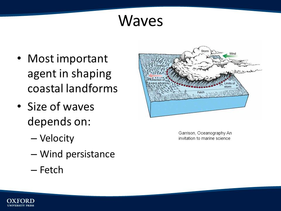 Waves Most important agent in shaping coastal landforms Size of waves depends on: – Velocity – Wind persistance – Fetch Garrison, Oceanography An invi