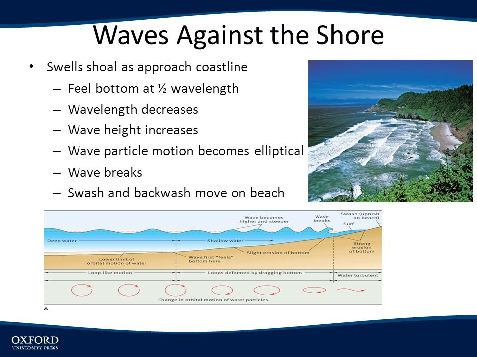 Waves Against the Shore Swells shoal as approach coastline – Feel bottom at ½ wavelength – Wavelength decreases – Wave height increases – Wave particl