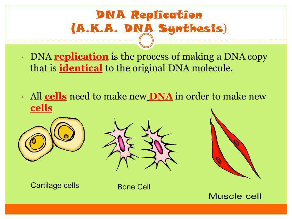 DNA Replication (A.K.A. DNA Synthesis ) DNA replication is the process of making a DNA copy that is identical to the original DNA molecule. All cells