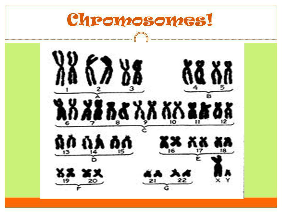 Chromosomes!