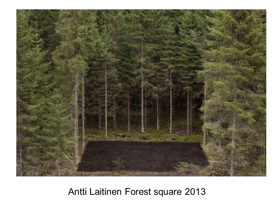 Antti Laitinen Forest square 2013