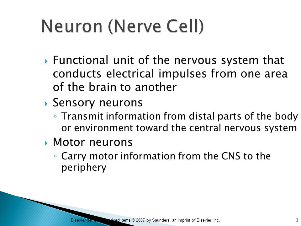 3Elsevier items and derived items © 2007 by Saunders, an imprint of Elsevier, Inc. Neuron (Nerve Cell)  Functional unit of the nervous system that co
