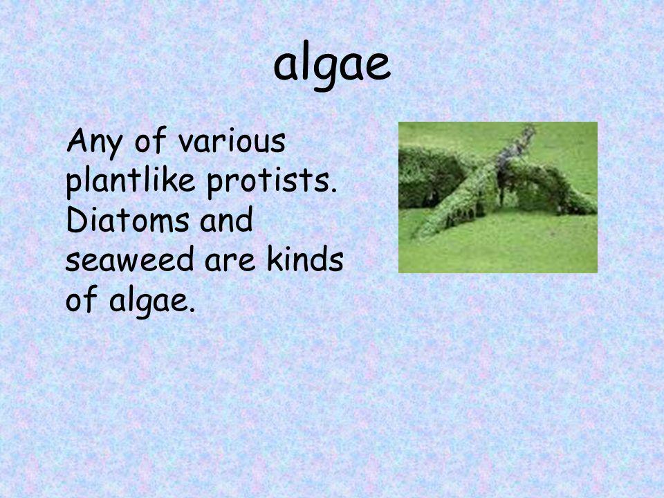 algae Any of various plantlike protists. Diatoms and seaweed are kinds of algae.