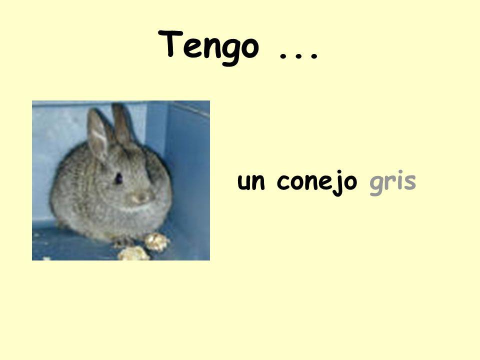 Tengo... un conejo gris